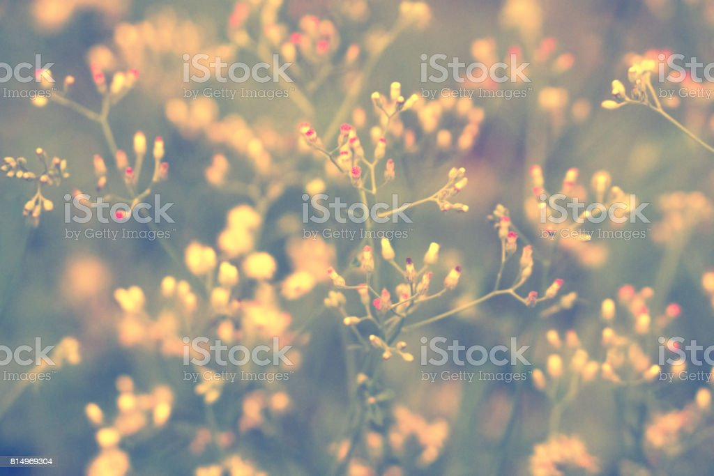 Soft focus Grass Flower  abstarct spring ,nature background stock photo