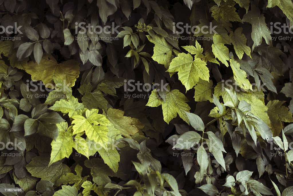 Soft - focus leaves bed royalty-free stock photo