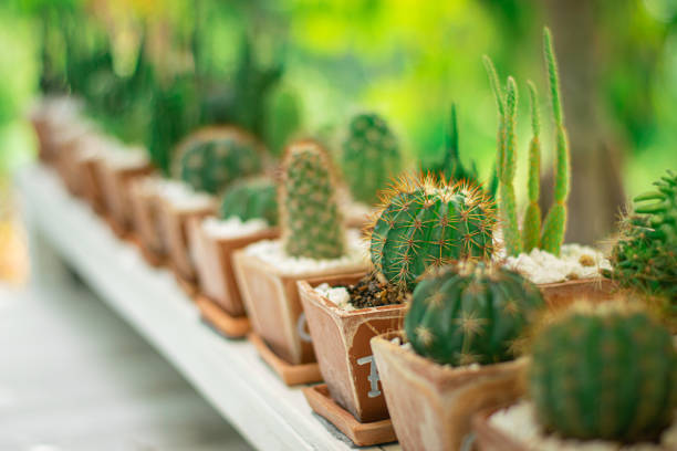 soft focus of green cactus plants stock photo