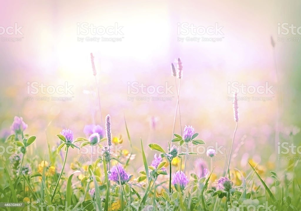 Soft focus on flowering clower stock photo
