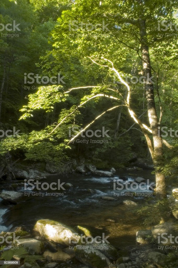 Soft Focus, Tree, Little Pigeon River, Great Smoky Mtns royalty-free stock photo