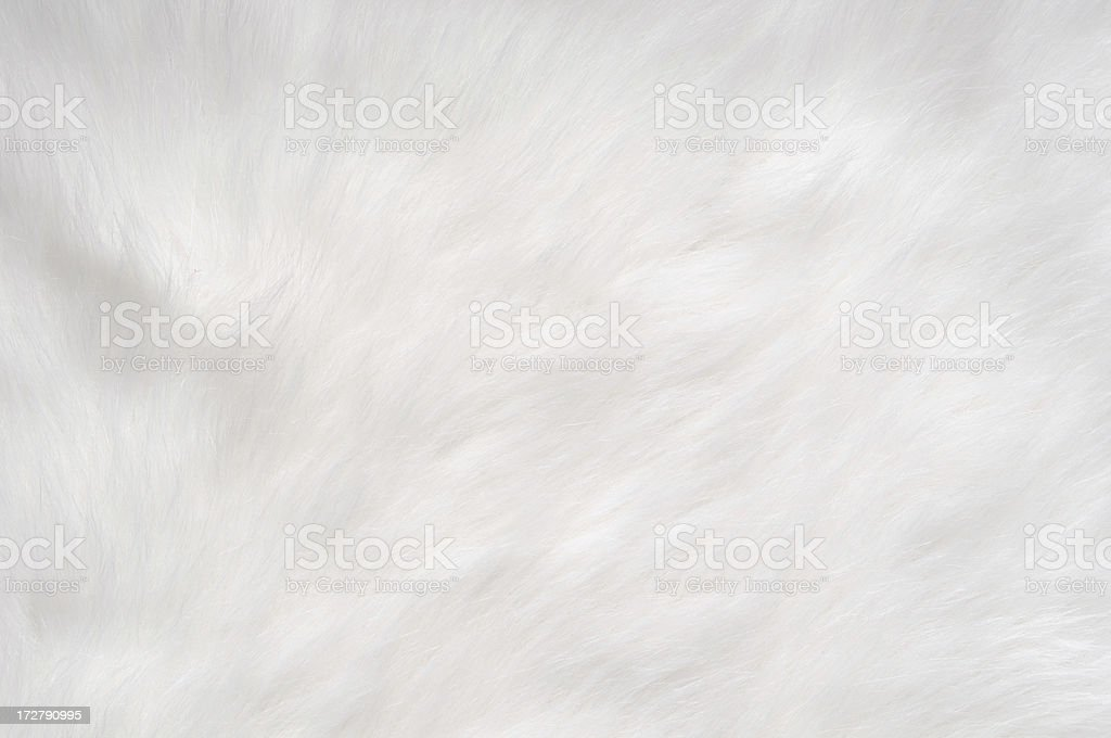 Soft, Furry Background stock photo