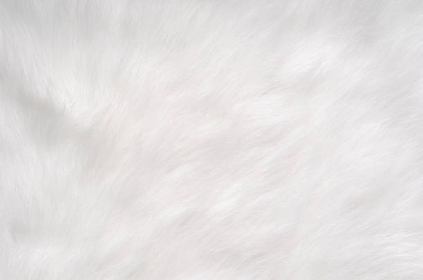 Soft, Furry Background