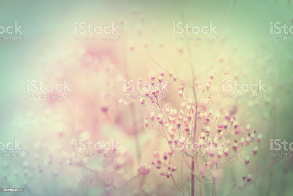 Soft Grass Flowers Field Sweet Nature Background For Valentine And Wedding Invitation Card Stock Photo Download Image Now