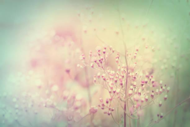 Soft grass flowers field sweet nature background for valentine and picture id892840500?b=1&k=6&m=892840500&s=612x612&w=0&h=u0idarzrojicjuns0osntiesvbiagnhkuflbra74una=