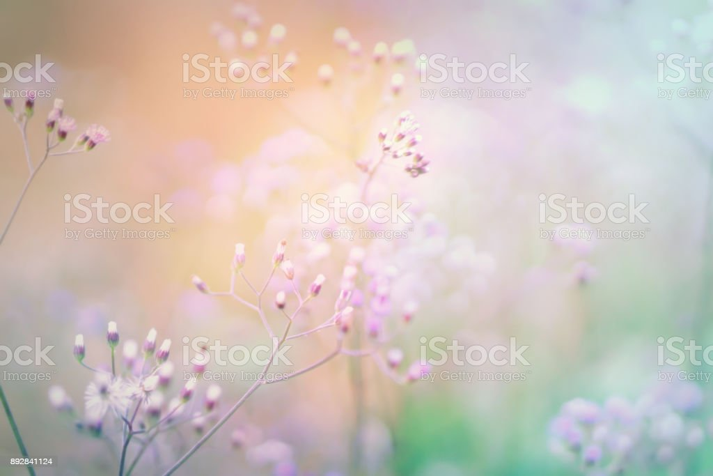 Soft Grass Flowers Field Sweet Nature Background For