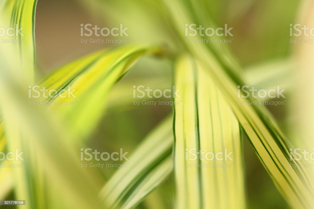 Soft green natural background stock photo
