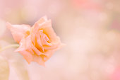 istock soft orange flower background and glitter light with copy space 848481550