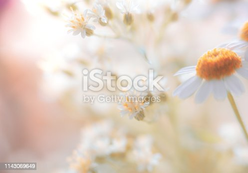 Soft Pastel Colored Daisy Flower Background with Copy Space