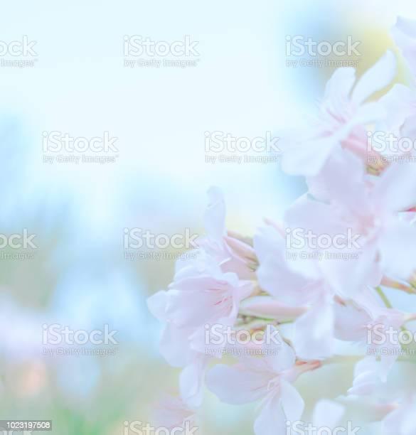 Soft pastel pink flower vintage background for special events picture id1023197508?b=1&k=6&m=1023197508&s=612x612&h=nzwwi6qeklqs2bdrg8cwod4udyajlhwmlijkbtyuwoc=