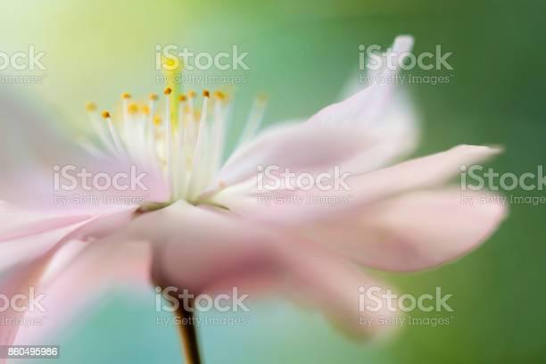 Photo of Soft Pink cherry blossom