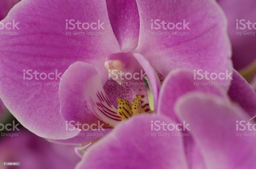Soft pink flower parts stock photo