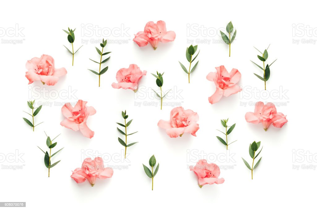 Soft pink flowers and green leaves on white background stock photo soft pink flowers and green leaves on white background royalty free stock photo mightylinksfo