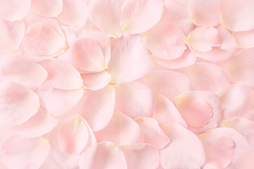 soft pink rose petals background