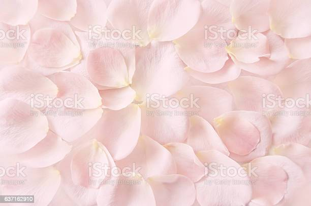 Soft pink rose petals background picture id637162910?b=1&k=6&m=637162910&s=612x612&h=wu5obxtwyz5 t4w3wxbpeggh0kq8cmf9lmhfbp9mgco=