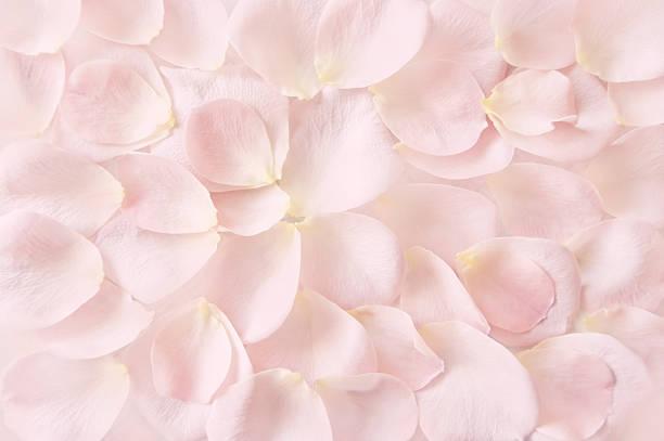Soft pink rose petals background picture id637162910?b=1&k=6&m=637162910&s=612x612&w=0&h=mmm2rszx71 ebs80azjlf c9ewysypacyzh2fij9ie0=