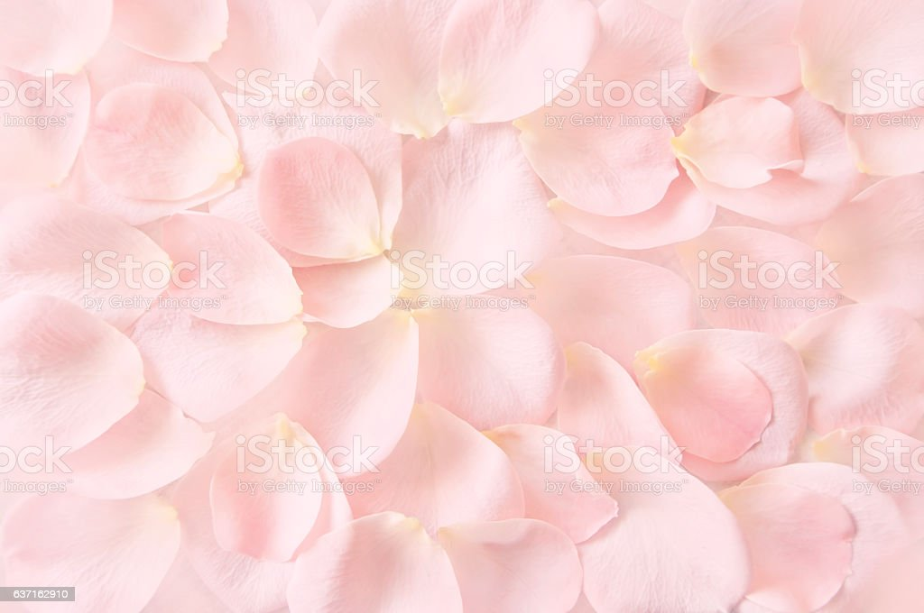 soft pink rose petals background stock photo