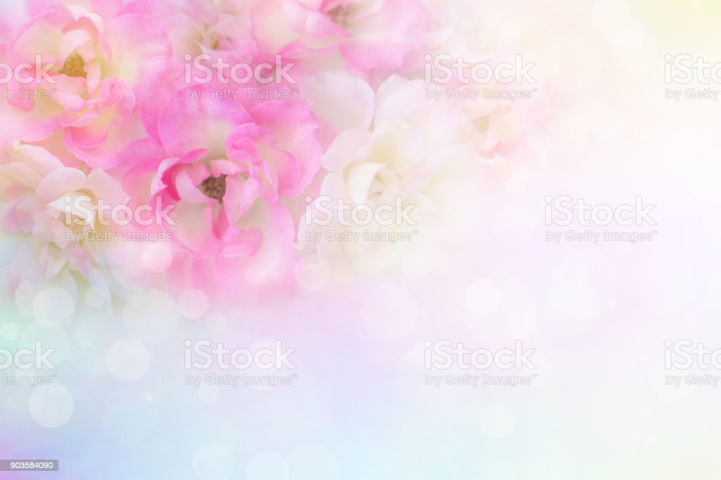 soft romance pink and white roses flower vintage background for valentine card with copy space for text royalty-free stock photo