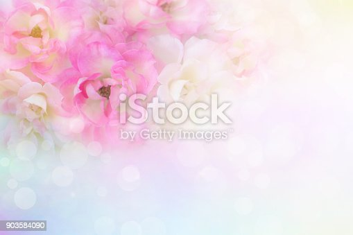 istock soft romance pink and white roses flower vintage background for valentine card with copy space for text 903584090
