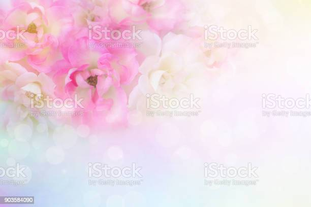 Soft romance pink and white roses flower vintage background for card picture id903584090?b=1&k=6&m=903584090&s=612x612&h=wsij0qaxo61wmygenazxxwggepke0middmmwvybxksm=