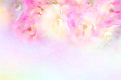 istock soft romance pink and white roses flower vintage background for valentine card with copy space for text 903585316