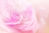 istock soft rose flower background in pink tone 1184965545