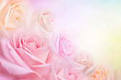 istock soft roses flower background with copy space for text 1130608989