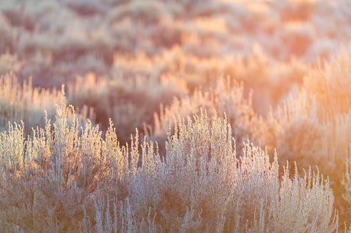 Soft sun sunset rays sunlight lift through grass green desert sage brush plants in Ranchos de Taos valley landscape in summer abstract pattern
