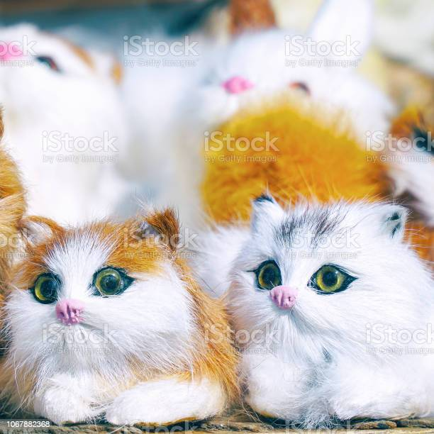 Soft toys kittens sitting in front of camera picture id1067882368?b=1&k=6&m=1067882368&s=612x612&h=j02ti75uiyxpciwuv5degouijzcyinquw ostszcov8=