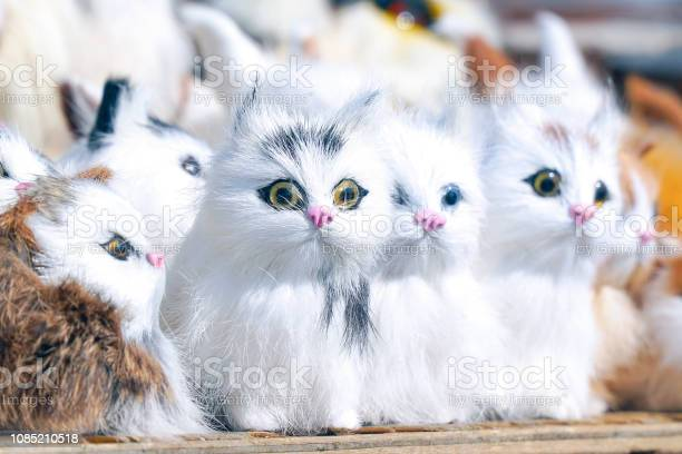 Soft toys kittens sitting in front of the camera picture id1085210518?b=1&k=6&m=1085210518&s=612x612&h=qmdn 5szcmplqlncvg45liplak4u j z2hq1ao dd0o=