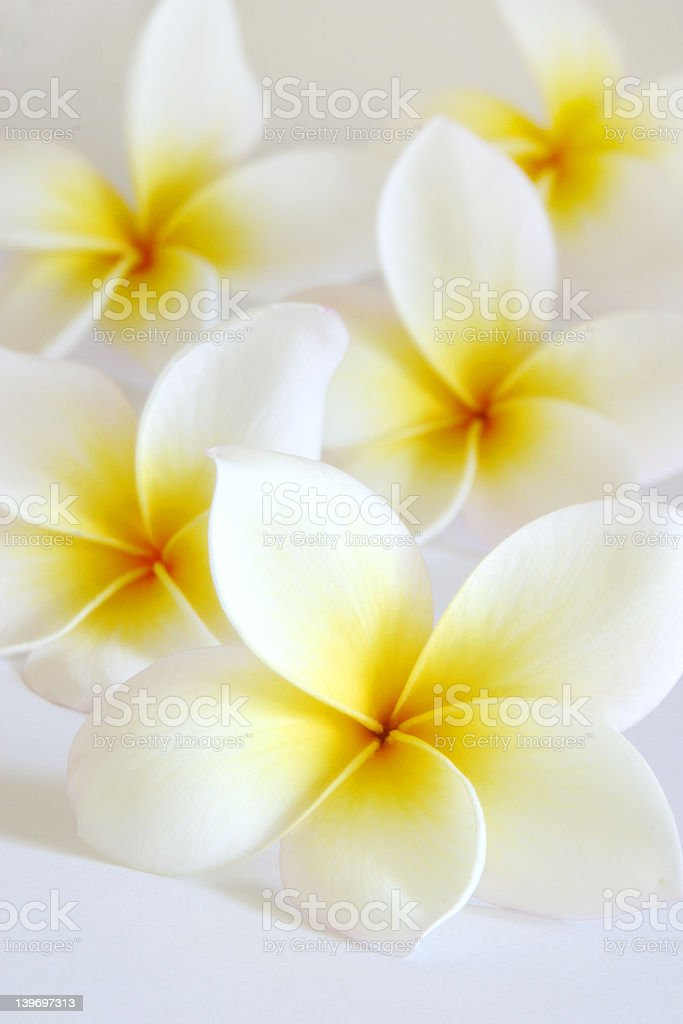 Soft Tropical Flowers royalty-free stock photo