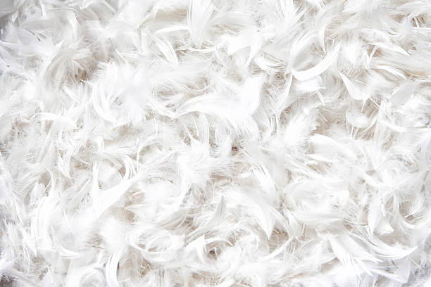 soft, weightless, gentle bird plumage texture for pillow stock photo
