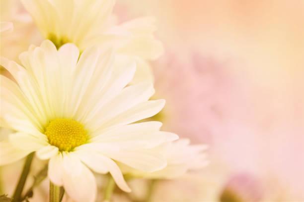 Soft white flower stock photo
