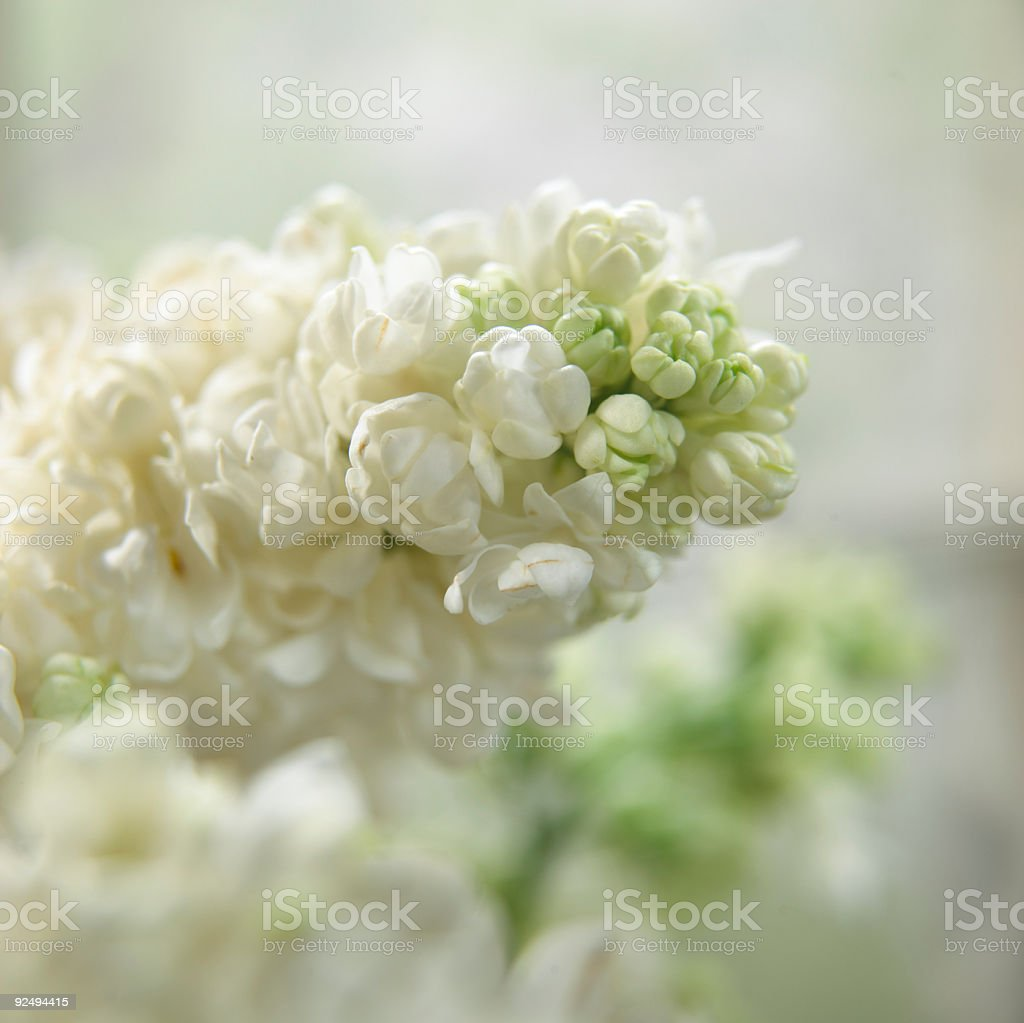 soft white royalty-free stock photo