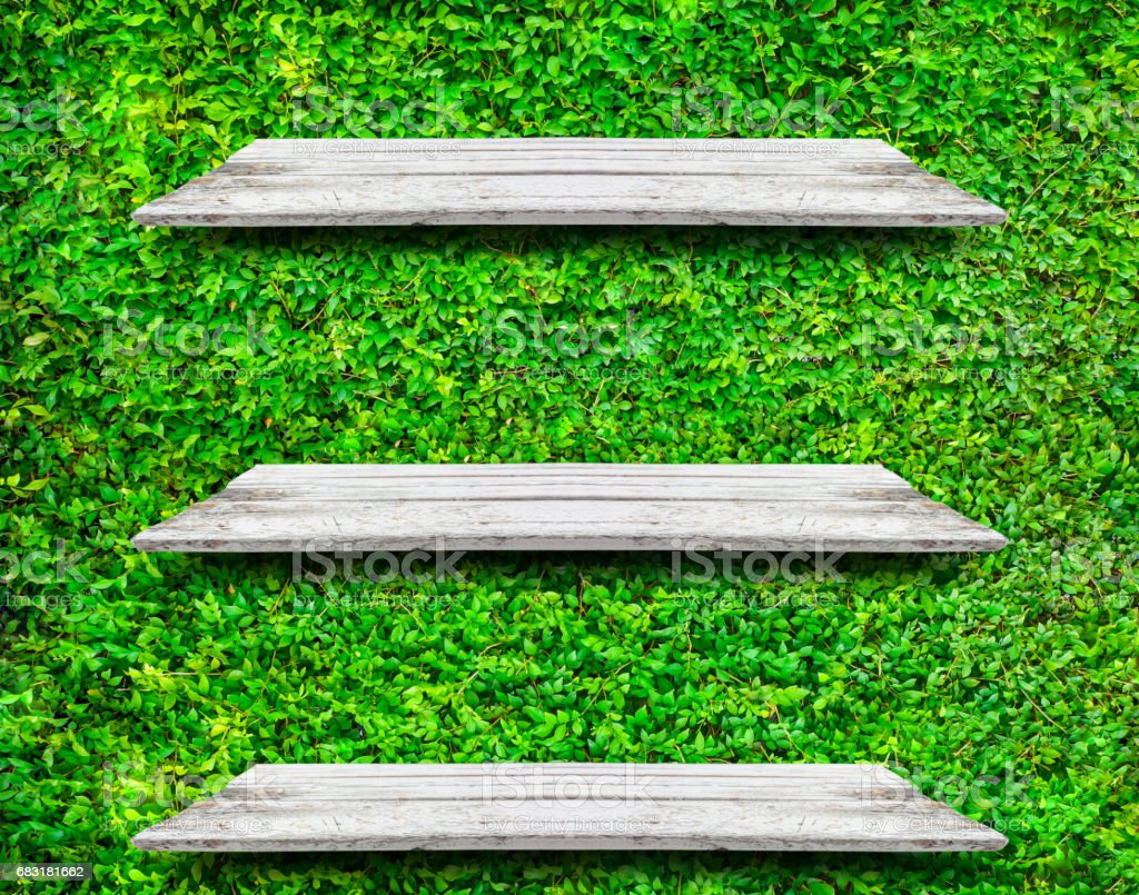 Soft white wooden shelves with fresh green small plants background royalty-free 스톡 사진