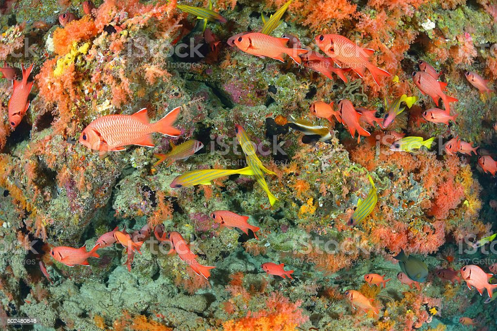 softcoral and fishes stock photo