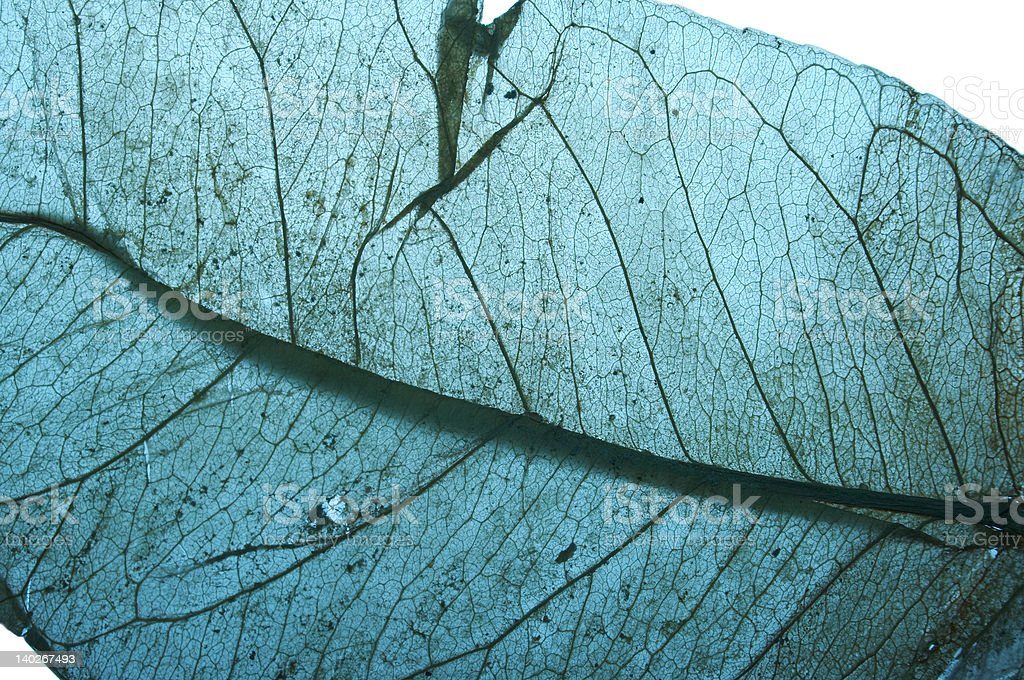 Soft-cyan leaf texture stock photo