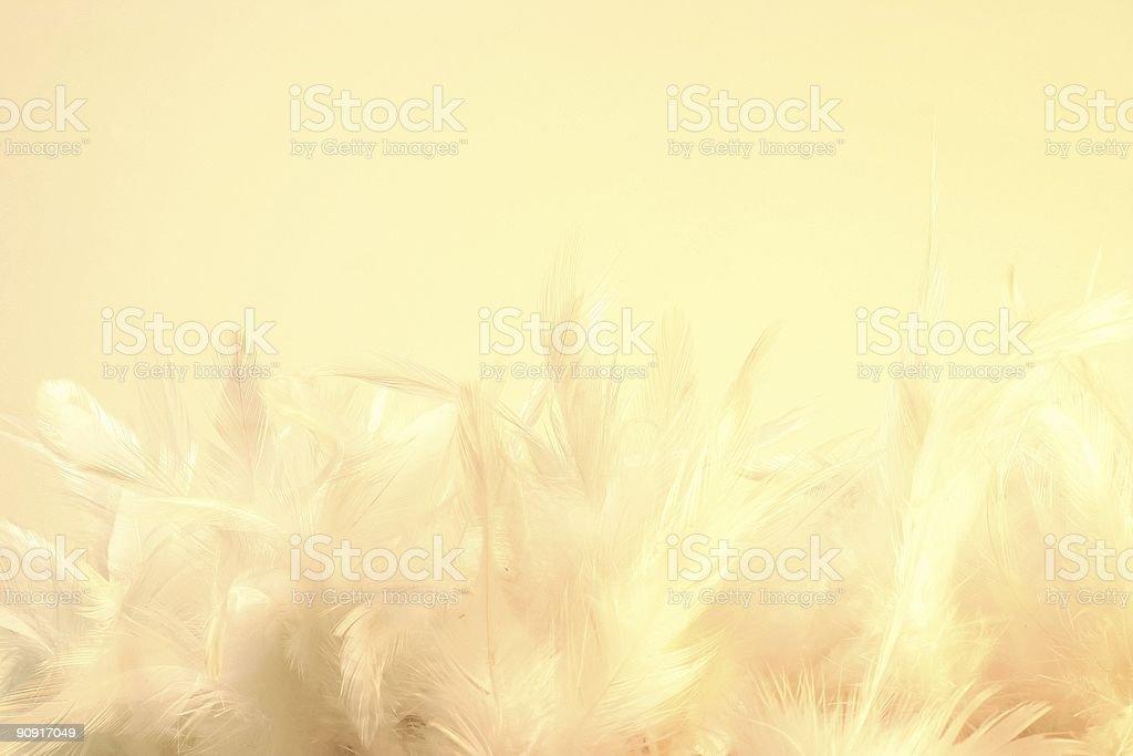 Softness royalty-free stock photo