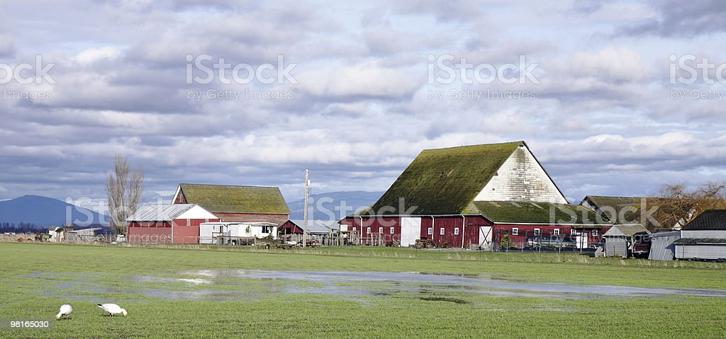 Soggy Day at the Farm royalty-free stock photo