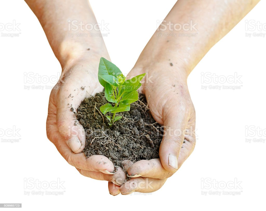 soil and green sprout in farmer hands stock photo