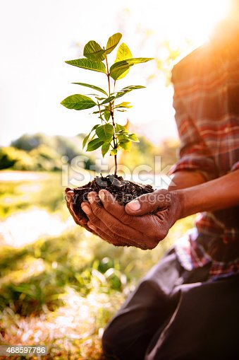 Planting a new tree in Springtime sunlight and healthy soil