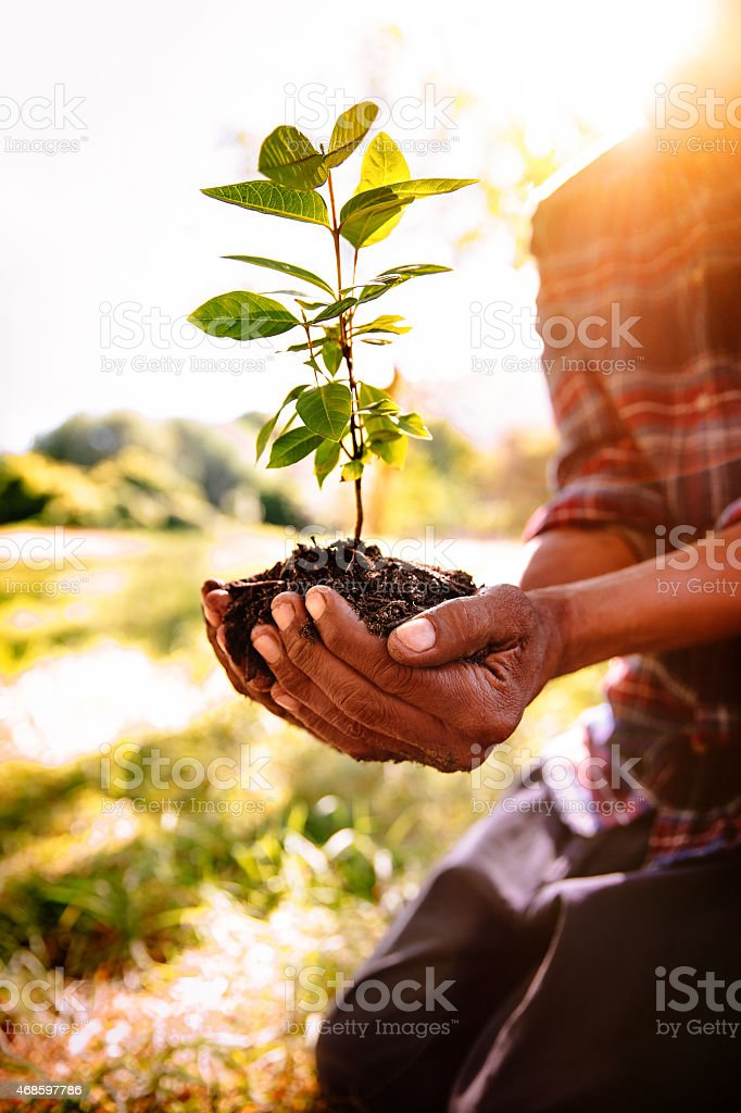 Soil and sunlight for a new Spring tree stock photo