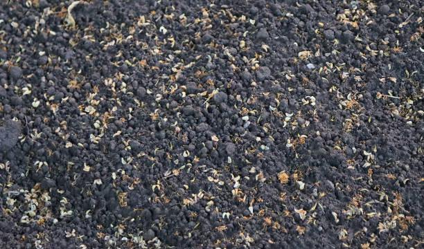 Soil background, black soil. stock photo