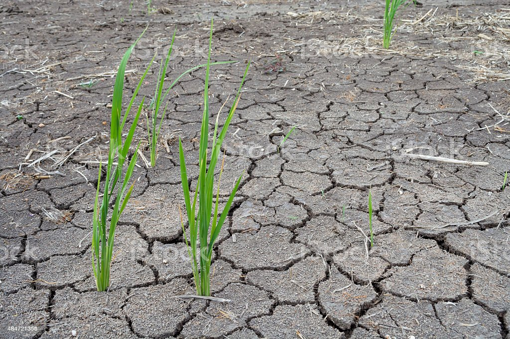 Soil drought cracked stock photo
