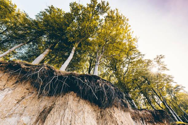 erozja gleby. - erodowany zdjęcia i obrazy z banku zdjęć