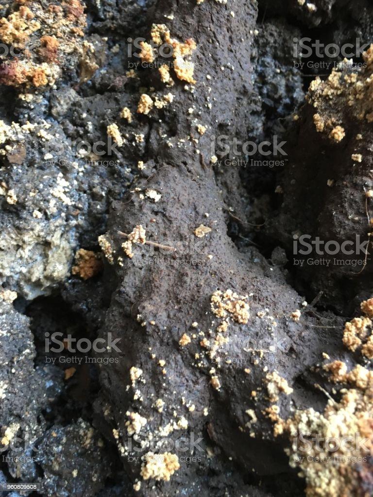 toprak zemin izole stok fotoğrafı
