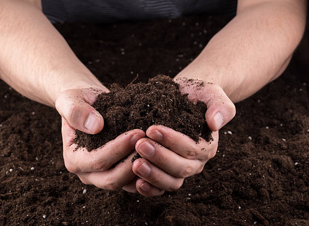 Soil in hands stock photo