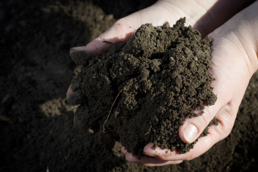 Soil Stock Photo - Download Image Now