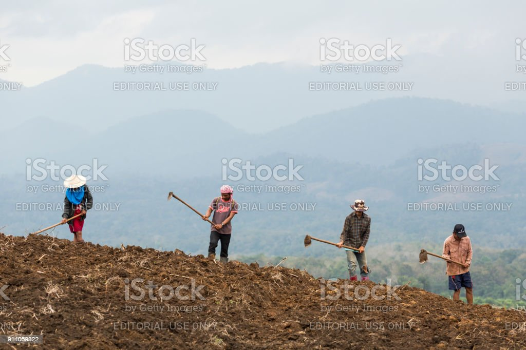 soil preparation for planting corn stock photo