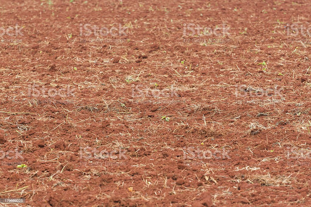 Soil preparation for planting royalty-free stock photo